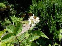 住吉公園の植物